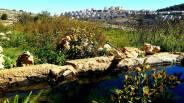 Wasserquelle gegenüber Efrat