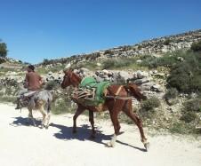 Auf dem Patriarchenweg, ein arabischer Dörfler.