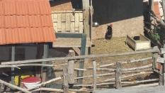 Wieso nicht auch Hühnern ein Dach überm Kopf bieten?