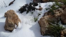 Grün im Schnee