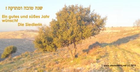 Eine israelische Eiche in den judäischen Bergen.