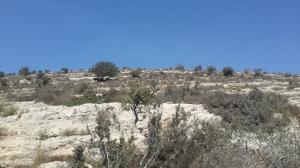 Wer genau hinschaut: auf dem Hügel sind Ziegen zu sehen