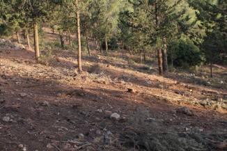 Kahlstellen nach Abholzung im lokalen Waldgebiet.  Foto: Yaron Rosental